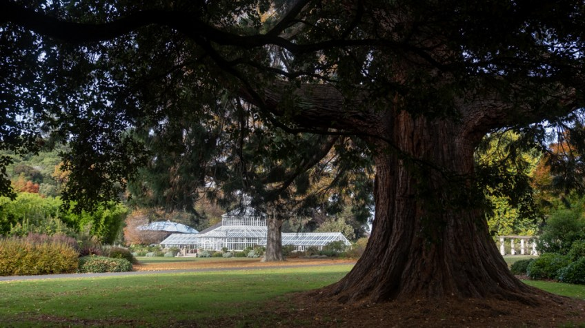 New Zealand Wanderings - Dunedin Botanical Gardens