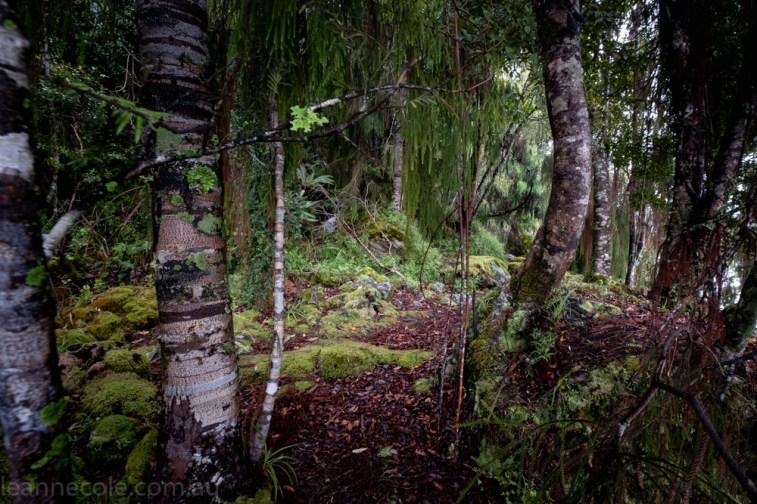 Rainforest Walk Lake Mapourika