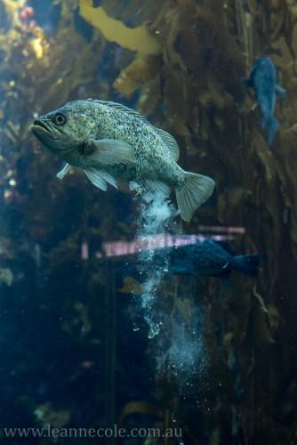 Silent Sunday - Monterey Bay Aquarium