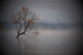 wanaka-tree-misty-morning-newzealand-9799
