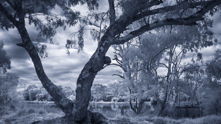 Monochrome Wednesday - Infrared in the park