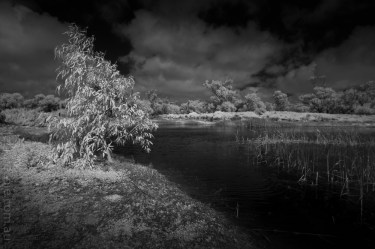 Weekend Wanderings - Around town with the IR camera