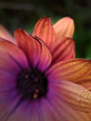Floral Friday - The garden with the Struman macro lens