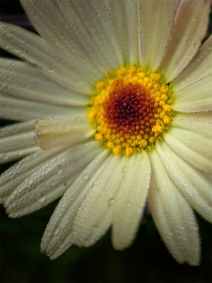 Floral Friday - The garden with the Struman macro lens