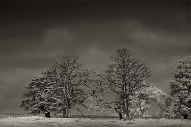 Monochrome Wednesday - More in infrared