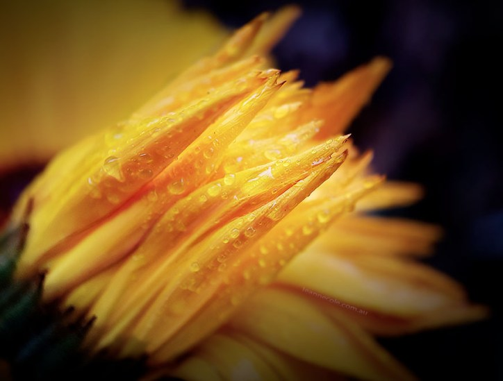Floral Friday - My garden a couple of years ago