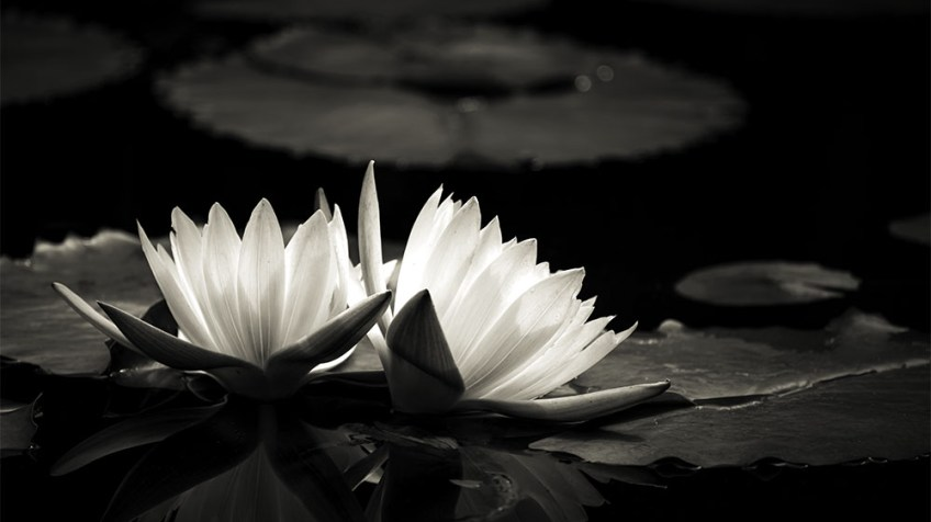 Monochrome Madness - Lotus
