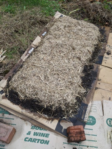 Trying a no dig garden bed