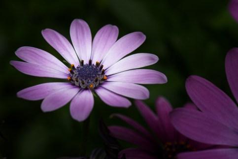 Springtime in my garden