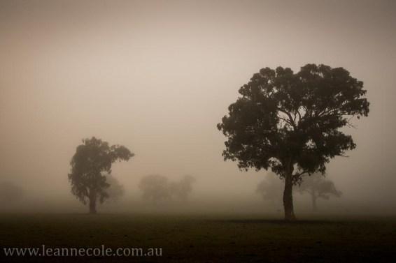 bonnie-doon-fog-winter--2474