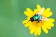 Flyandflower