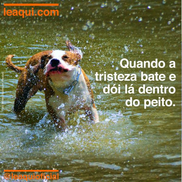 Cachorro se sacudindo em meio a um lago, mostrando o que fazer quando a tristeza dói.