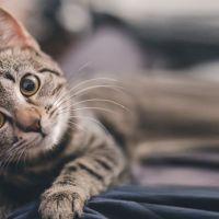 O mistério insolúvel dos gatos pode nos ajudar a resolver problemas
