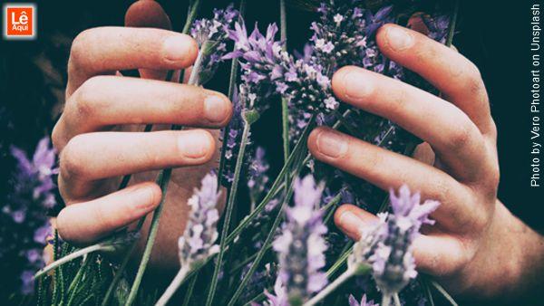 Mãos segurando um maço de flores de lavanda que é um dos principais óleos essenciais.