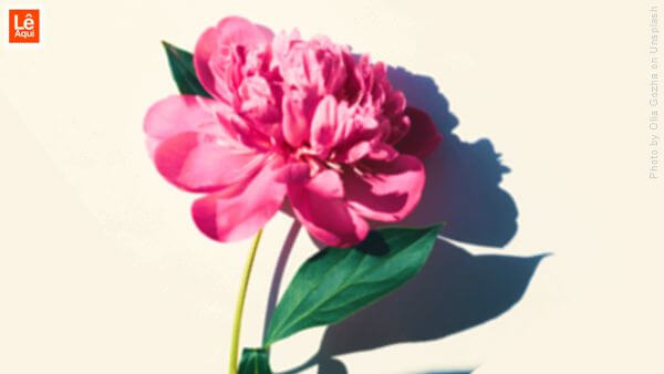 Uma bela flor rosa simbolizando o fruto de cultivar relacionamentos