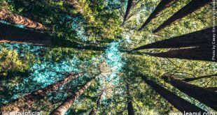 No Dia Mundial do Meio Ambiente, é preciso ouvir a natureza
