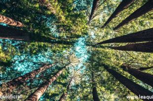 imagem de árvores da amazônia Dia Mundial do Meio Ambiente