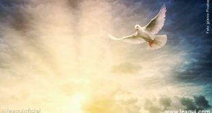 uma pomba branca voando em uma aurora que lança suas cores ao céu violência no mundo