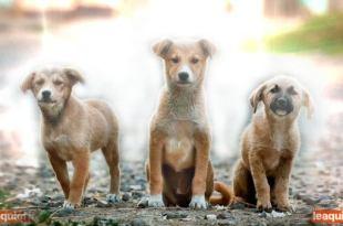 imagem de 3 pequenos filhotes de cachorro como se fossem espíritos histórias espíritas sobre animais