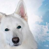 A ligação espiritual com os nossos animais de estimação