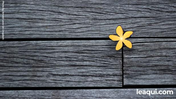 uma pequena e simples flor sob uma madeira velha Deus ao lado para amparar