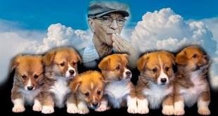 A ninhada de cachorrinhos que Chico Xavier salvou