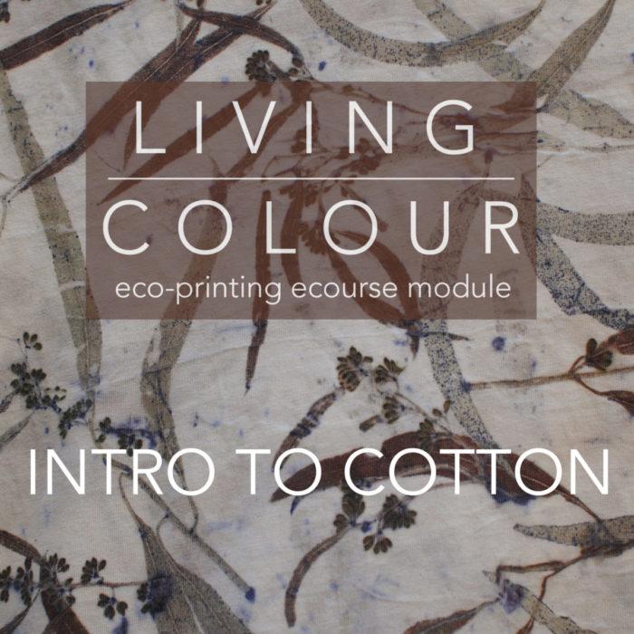 Intro to Cotton