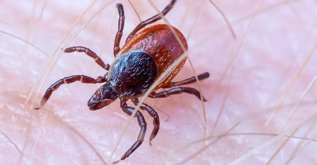When a blacklegged tick bite is more than a bite