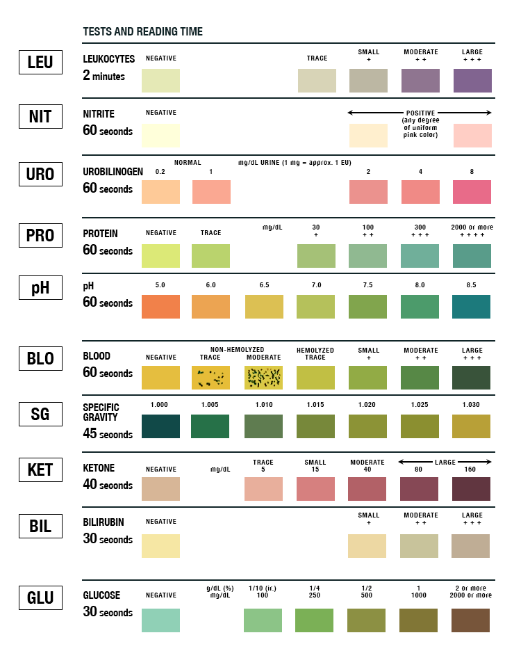 Rapid Chart Results Urine Test Color Test Rapid Chart Results Color Urine Drug Drug