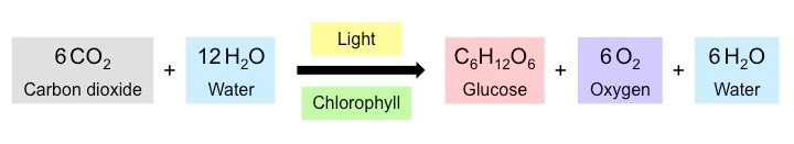 photosynthesis equation nutrition in plants