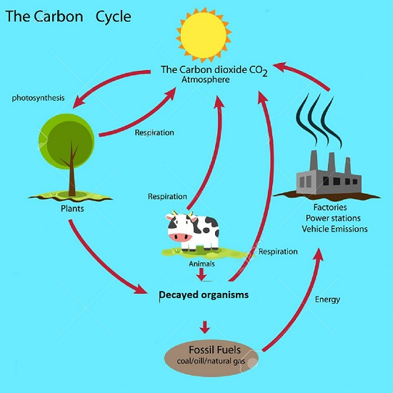 carbon cycle in atmosphere
