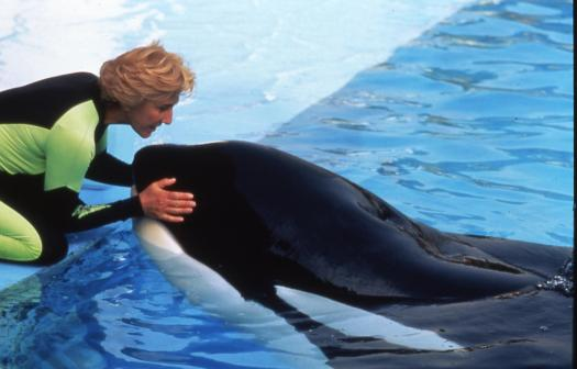 Keiko the Orca whale and Linda Tellington Jones
