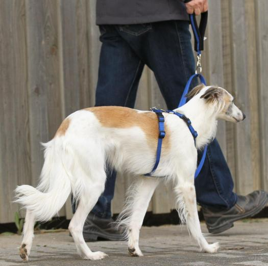 TTouch Harmony Harness System for dogs