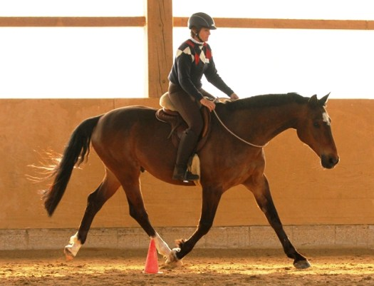 Bridleless riding with the TTouch liberty neck ring