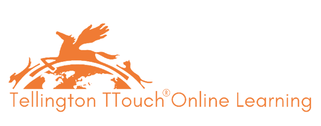 TTouch Online Learning Platform