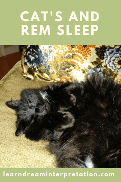 Cats REM Sleep