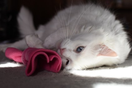 Meows on the Mat