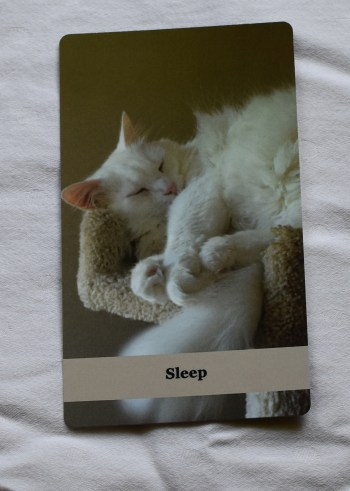 Purrs for Humans ~ sleep
