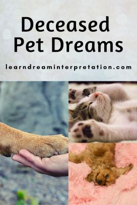 Dreams of Deceased Pets