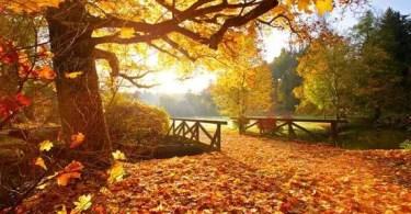 Lesson 69 - Autumn