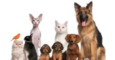 Lesson 48 - Pets