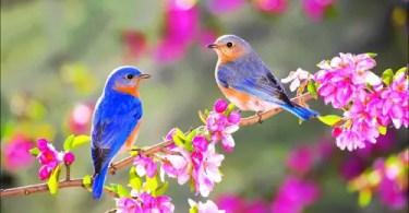 Lesson 62 - Spring