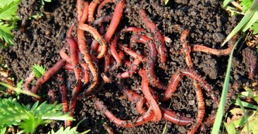 VOA Learning English - Putting Worms to Work to Help Your Garden