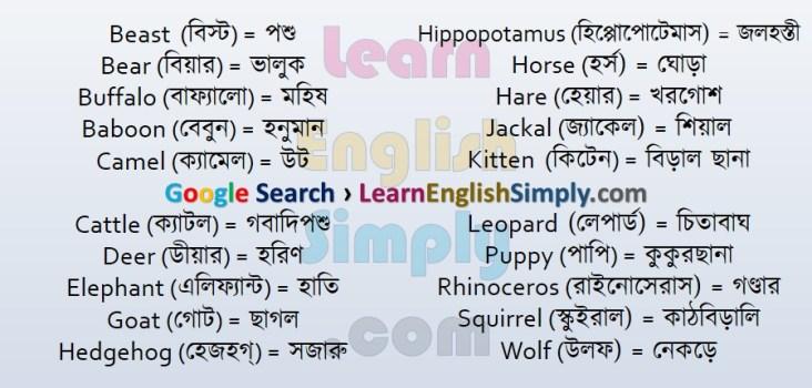 Vocabulary Animal