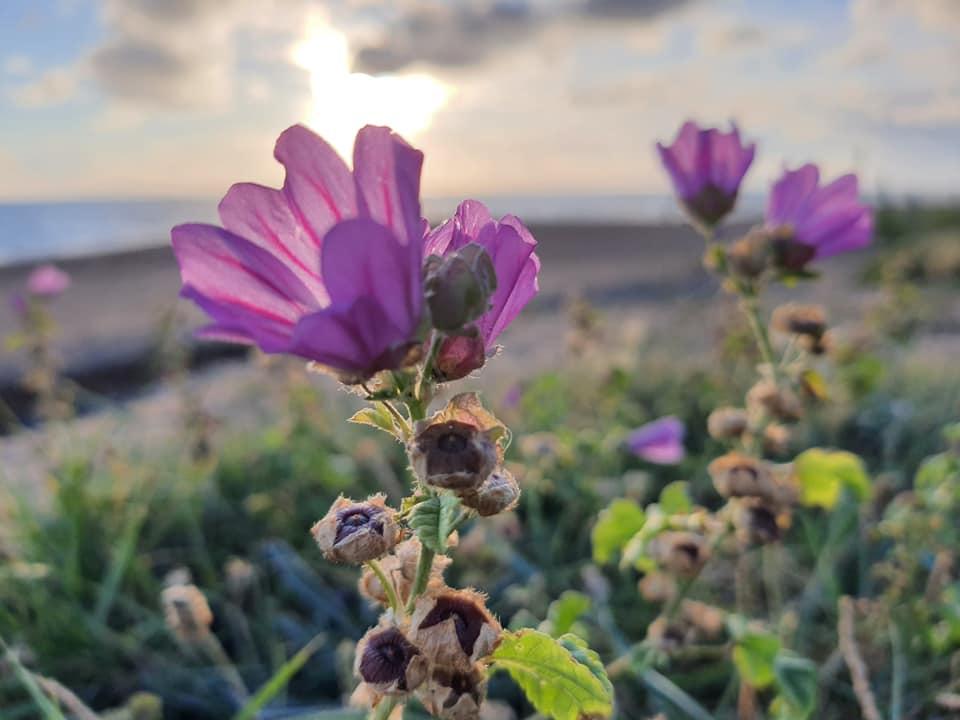 Flowers in Les Sables D'olonne