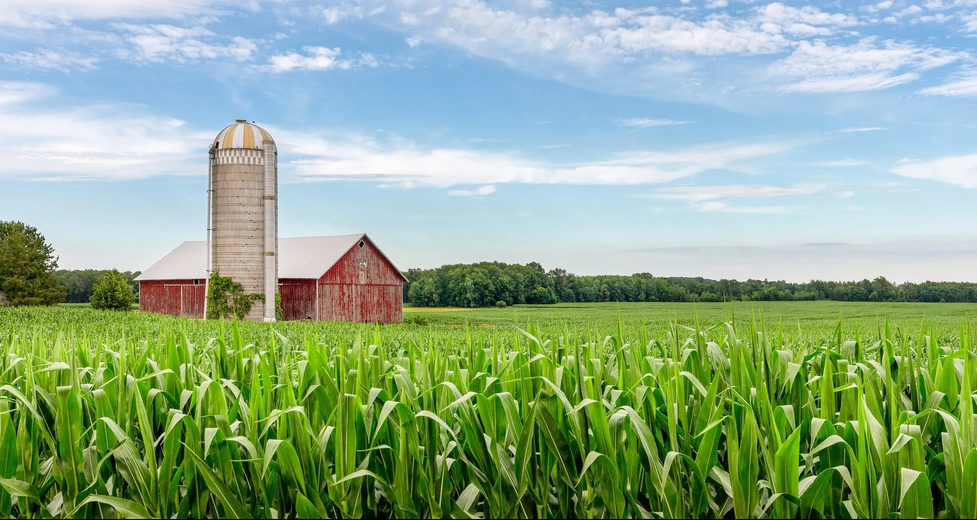 American homesteading - red barn and cornfield