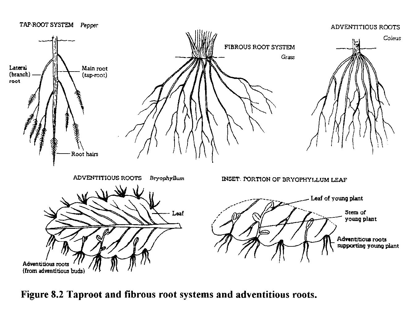 Types Of Roots Pictures To Pin