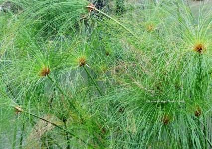 Green Plants-L2H