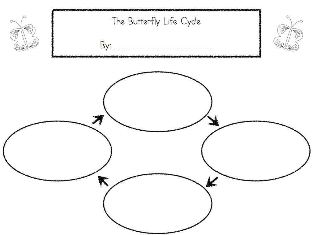 Life Cycle Activities