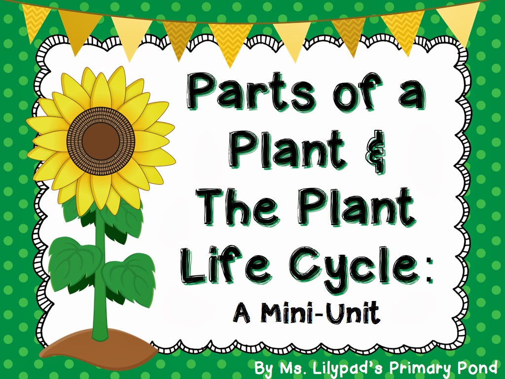 Worksheet Life Cycle Of A Plant Worksheet Worksheet Fun